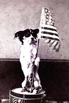 Dog-o-War